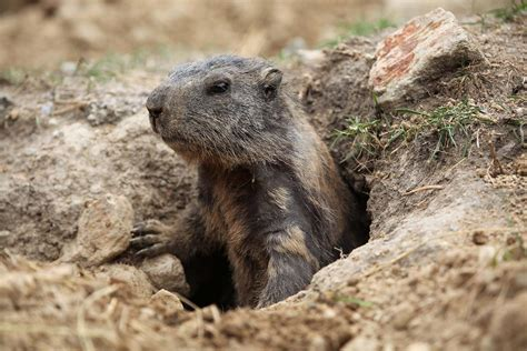 groundhog day define underground wonders for wee ones family information