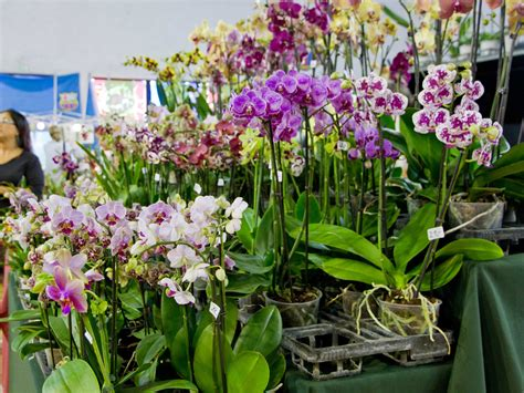 how to grow orchids for profit 5 steps with pictures