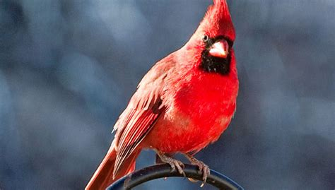 attracting birds in the fall and winter