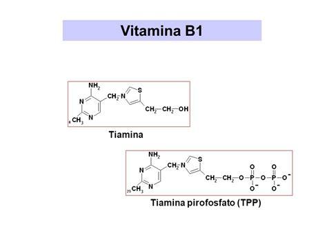 tiamina alimenti idrosolubili liposolubili ppt scaricare