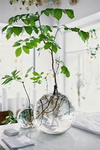 Impressionnant Plante Pour Salle De Bain #4: plante-verte-intérieur-déco-vase-cuisin-détail.jpg