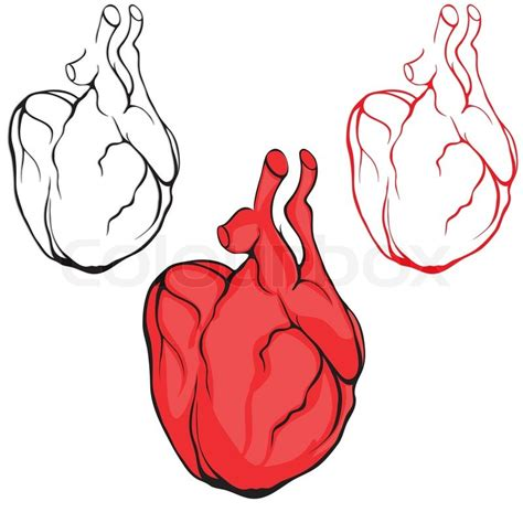 heart shape man scaping human body medical sketch