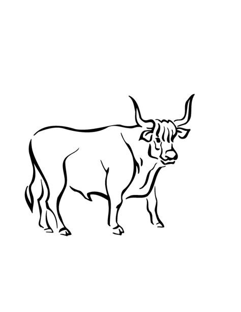 ox coloring page coloring home