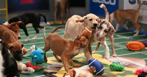 puppy bowl puppy bowl go the of the year s cutest event collider