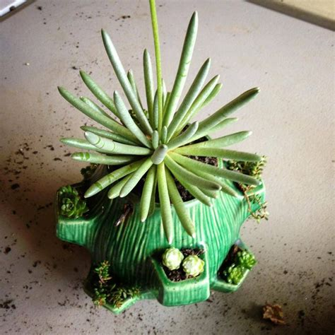 dish garden containers made at bring your own container succulent dish garden