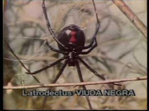 imagenes de animales venenosos animales venenosos ara 241 as y ofidios youtube
