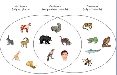 herbivore carnivore omnivore venn diagram omnivore animals png transparent omnivore animals png images pluspng