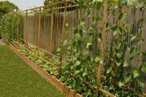Trellis For Pole Beans pole bean trellis gardening