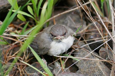 baby bird photo