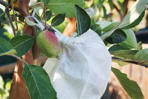 control fruit fly organic gardener magazine australia