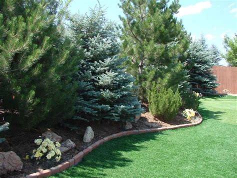 The 25 Best Privacy Landscaping Ideas On Pinterest Trees For Privacy In Backyard
