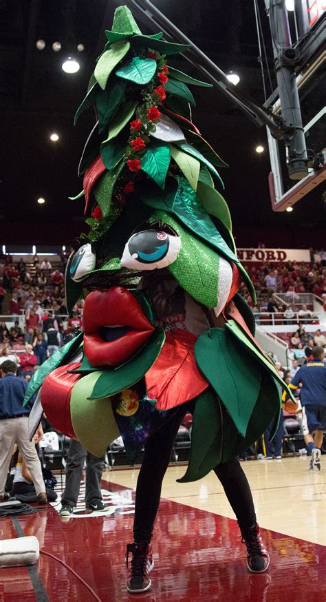 tree mascot the origins of stanford s quot tree quot mascot the daily