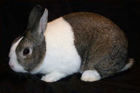 Boneka Kelinci kelinci lucu