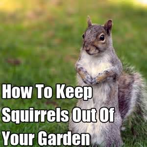 how to keep squirrels away from your garden