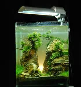 aquascape kecil gallery foto aquascape mini ferboes