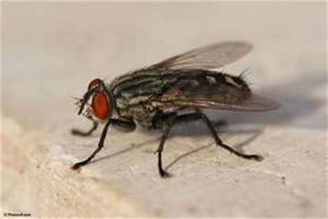 horse flies in my house image gallery large flies