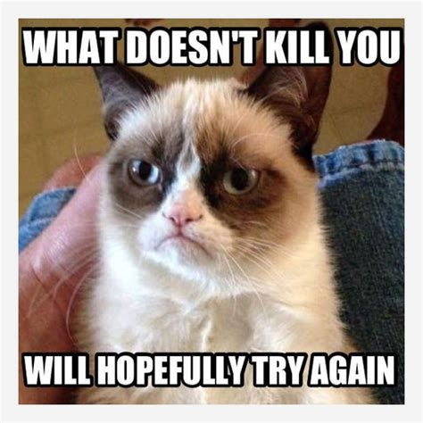 Grumpy Kitty Meme - grumpy cat sunday true stories