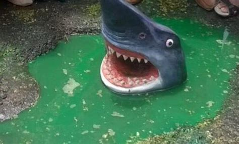 baby shark acoustic by passers spot baby shark in delhi s potholed road