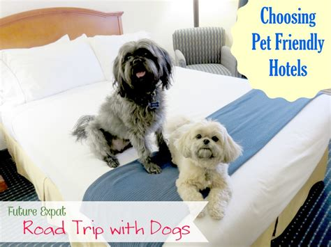hotels that allow dogs road trip with dogs choosing pet friendly hotels future expat