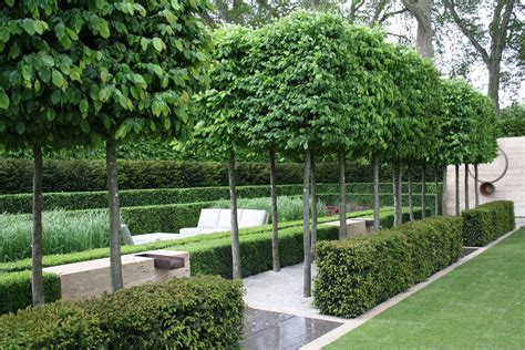 Bambus Hecke Sichtschutz 1439 by Image Result For Http Andersonlandscapedesign Co