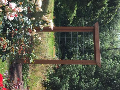 rose trellis plans rose growing care how to articles pick a proper