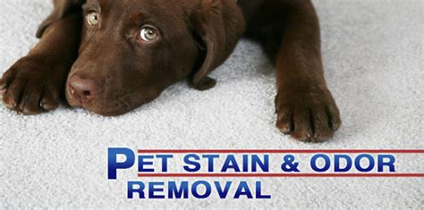 remove pet odor from couch taking care of pet stains remove them before it s too
