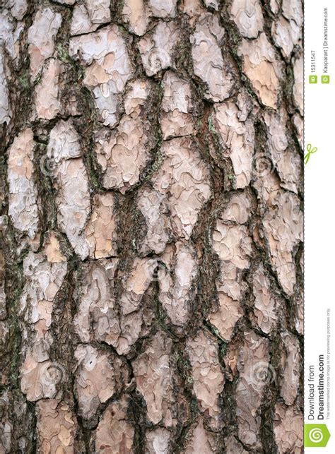 bark of a pine tree royalty free stock photography image