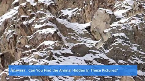 Photo Finder Can You Find The Animal In These Photos