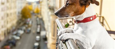 dog friendly housing emotional support animal blog