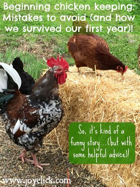 how i survived my year with chickens books 616 best images about backyard poultry on