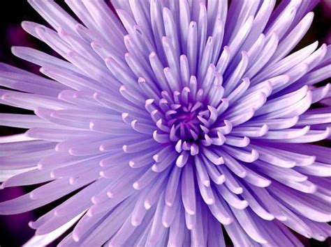 hues of purple 66 best hues of purple images on pinterest the color