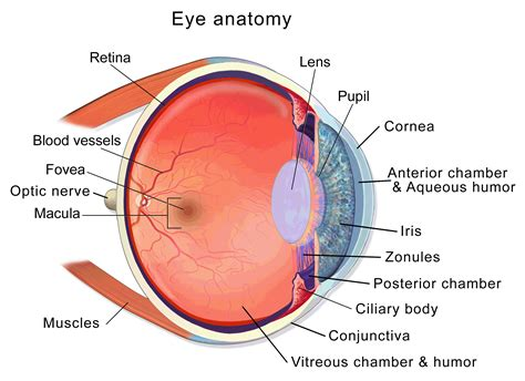 eye diagram folder at conference 2014 aniridia network uk