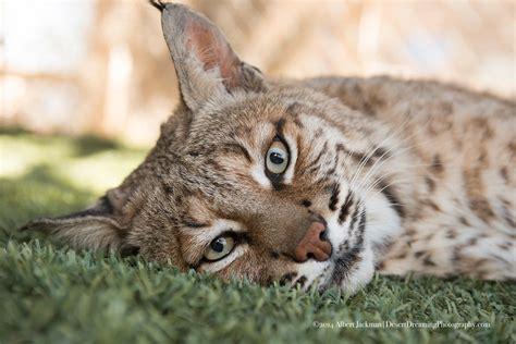 Detox Center On Ajo Tucson Az by Wildlife Rescue