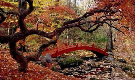How to choose top trees for autumn colour   Garden   Life