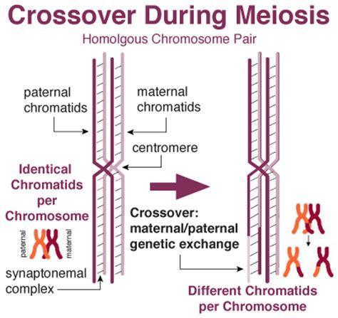 image gallery maternal chromosomes