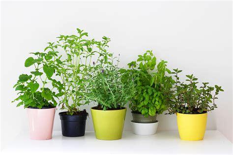 Aromates En Pot by Mes Plantes Aromatiques Mango And Salt