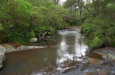 chaelundi cground nsw national parks
