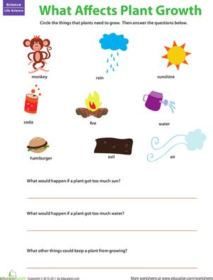 plant matters what plants need worksheet education com