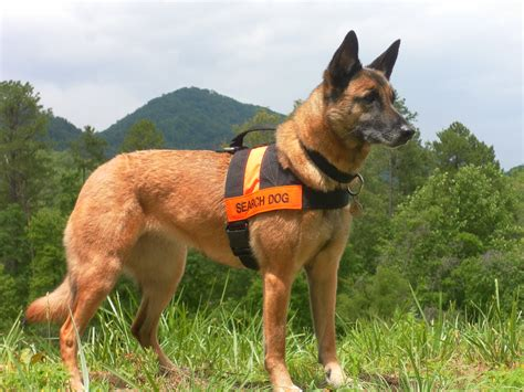 search dogs best friends 187 sar c