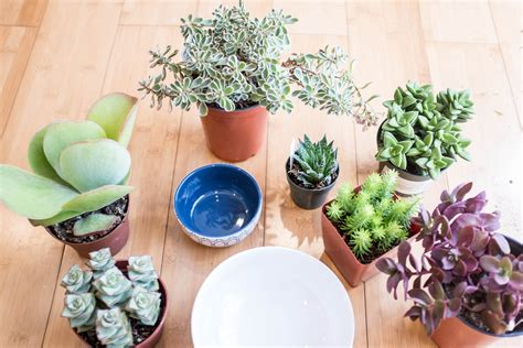success with succulents choosing growing and caring for cactuses and other succulents books how to plant a succulent container garden in a bowl