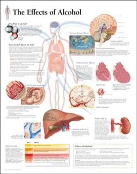 Acute Lead Detox by Causes Acute Reversible Fatty Liver Which In