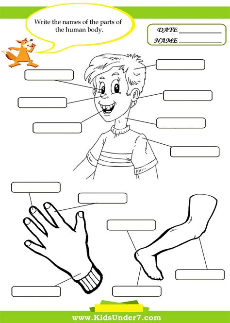 printable activities for children parts of the body body parts pictures for kindergarten kids coloring