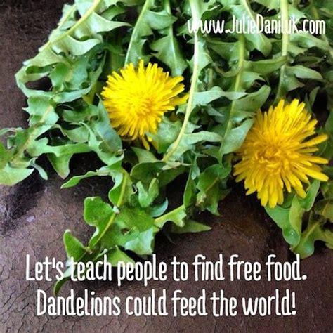dandelion facts dandelion greens the healing weed http juliedaniluk com
