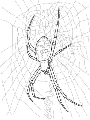 trapdoor spider coloring page black and yellow garden spider coloring page free