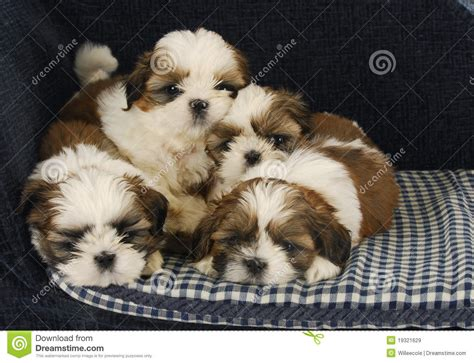 litter of puppies litter of puppies royalty free stock images image 19321629