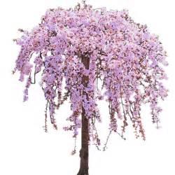 Sakura spirit download free elhouz