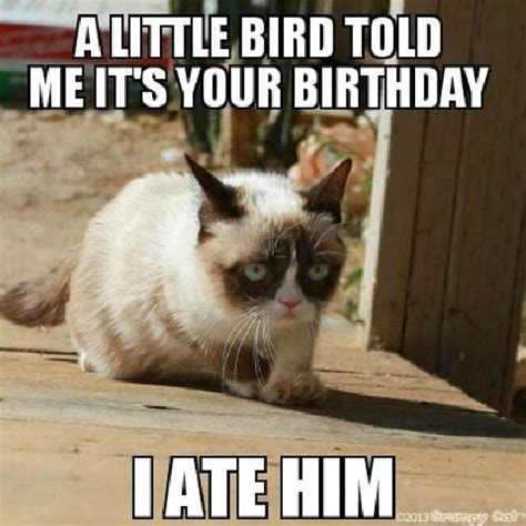 Grumpy Cat Happy Birthday Meme - caterville grumpy cat memes