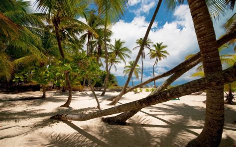 nature landscape palm trees beach sand tropical