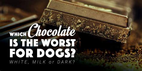 can dogs eat chocolate can dogs eat chocolate white milk