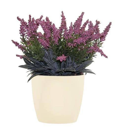 erika pflanze k 252 nstliche erika pflanze weinrot 24cm getopft